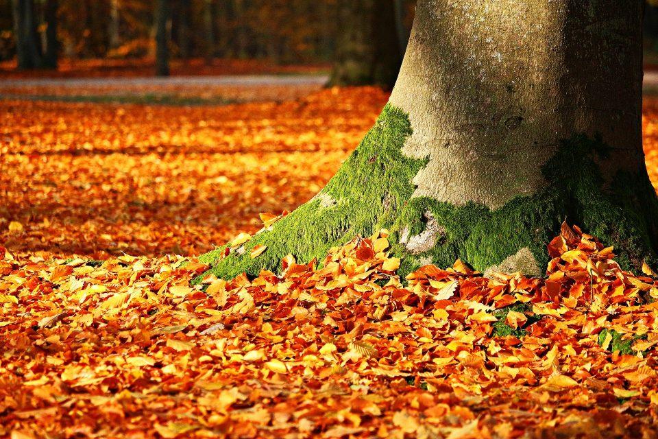 feuilles mortes près arbre