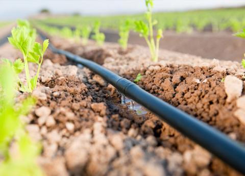 irrigation goutte